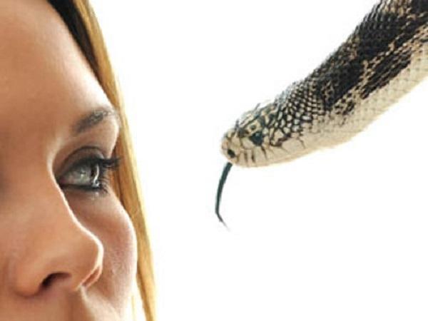 Mơ bị rắn cắn đánh đề bao nhiêu – Giải mã giấc mơ bị rắn cắn