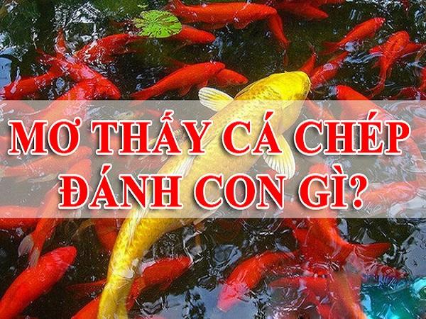 Chiêm bao mơ thấy cá chép đánh lô đề con gì?