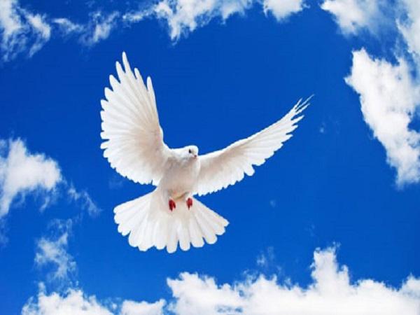 Mơ thấy chim đánh con gì – Bí ẩn giấc mơ thấy chim