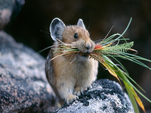 Mơ thấy chuột điềm báo gì – Chiêm bao mơ thấy chuột đánh con gì