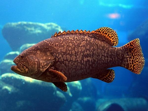 Mơ thấy con cá