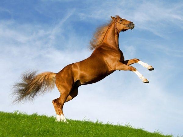 Ngủ mơ thấy con ngựa và những con số đề liên quan
