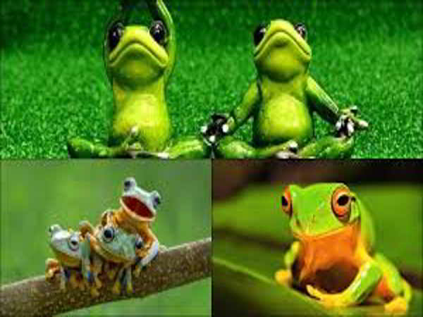 Nằm mơ thấy ếch là điềm báo tốt lành hay xui xẻo?