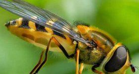 Ngủ mơ thấy côn trùng điềm báo gì và nên đánh con xổ số nào