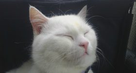 Nằm mơ thấy mèo trắng có ý nghĩa gì nên chơi xổ số con gì