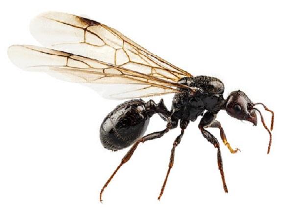 tổ ong trong nhà tốt hay xấu