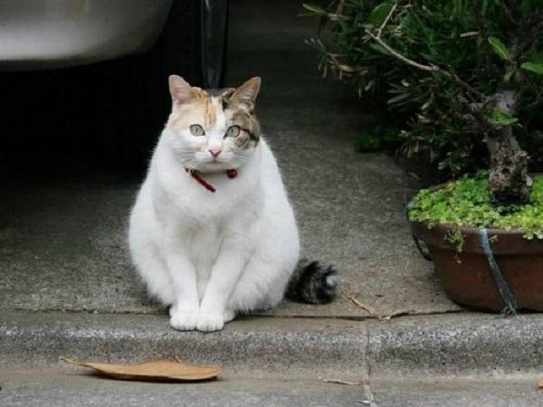 Mèo vào nhà có điềm báo gì? tốt hay xấu?