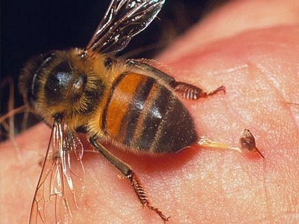 Bị ong chích là điềm gì? Tốt hay xấu?